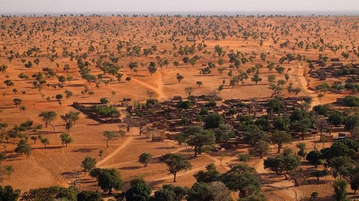 1,8 Milliarden Bäume in Der Sahara Entdeckt