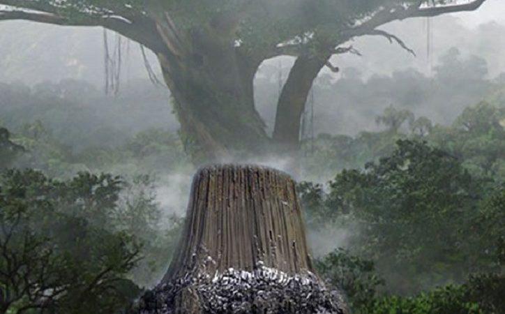 Beweise für die 37 Meilen hohen Bäume verstecken sich in Sichtweite
